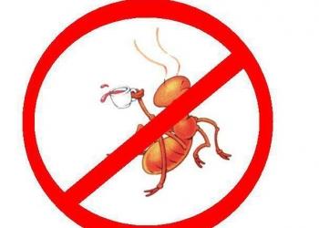 Избавиться от муравьев, обработка от муравьев в Ростове и области.