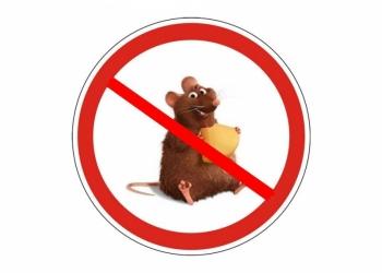 Обработка от мышей, избавиться от мышей в Ростове и области.