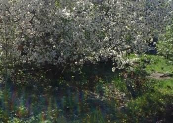 ПРОДАЮ ДАЧУ на берегу Варваровского водохранилища
