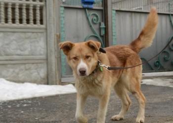 Сема Собака с янтарными глазами