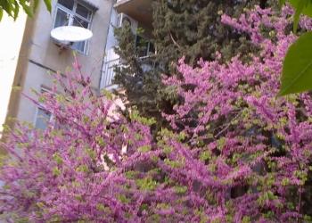 2-комнатная квартира в Баку