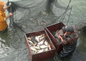 Продаю готовый бизнес по выращиванию и реализации прудовой рыбы