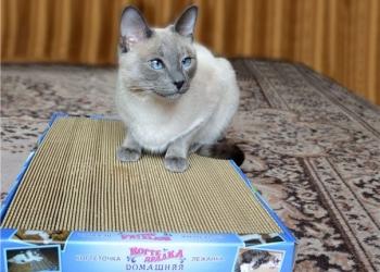 Супер-когтеточки-лежанки для кошек в Хабаровске.