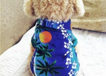 Одежда для собак / кошек футболка