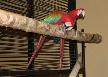 Зоогостиница, передержка попугаев, птиц - Зооняня