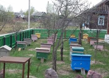 Продаются 10 пчелосемей