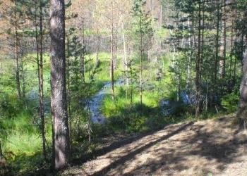 Продажа участка в Финляндии