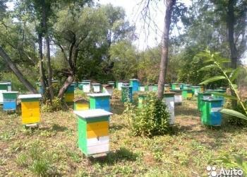 Продам пчёло пакеты