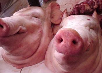 Свиная голова, рулька, копыта