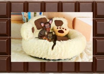 Две роскошные шоколадницы, гладк.Той Терьера