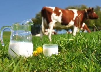Имущественный комплекс: производственное помещение и территория (молокозавод)