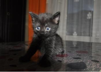 Отдам котёнка в добрые руки.