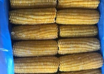 Кукуруза замороженная в початках