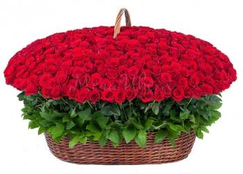 101,501,1001 роза