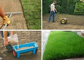 Посевной газон.посев семян газонных трав.
