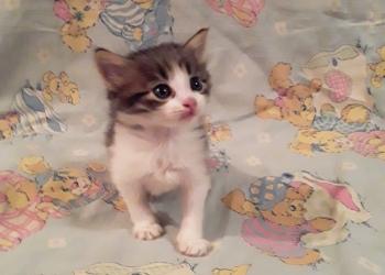 Котёнок в добрые руки бесплатно