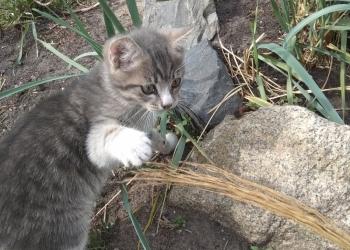 Здоровые веселые котята