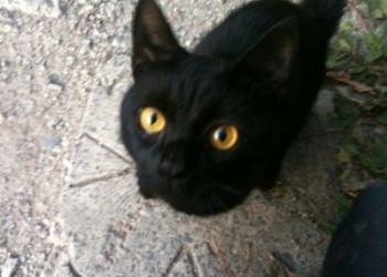 кошка 3-х лапка Маша ищет семью!