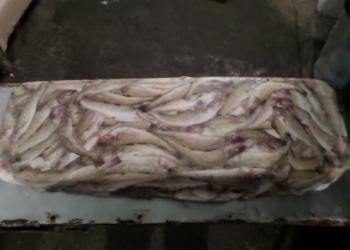 Рыбопродукция, отходы рыбопереработки
