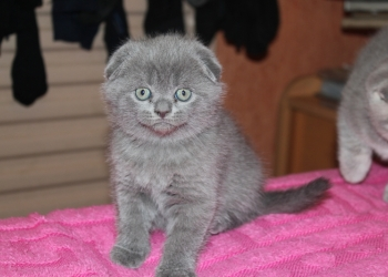 Продаюся котята