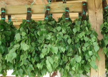 Веники для бани березовые, дубовые