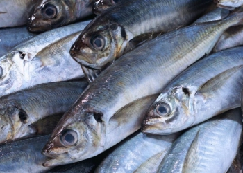 Рыба с/м оптом
