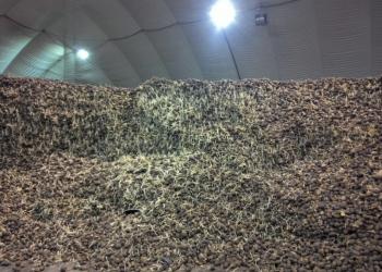 Продам картофель ОПТ сорт каролина