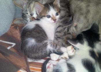 Очаровательные котята в добрые руки!