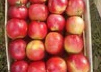 Яблочки Свежие.Опт.Сербия