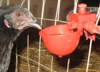 Поилки для птицы