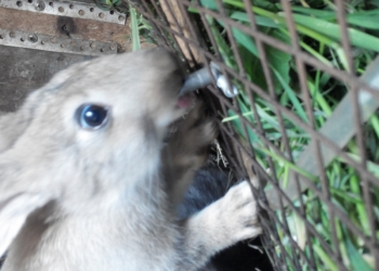 Нипельные поилки для кроликов