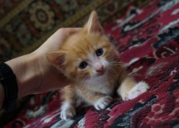 Отдаем котенка