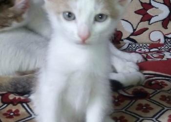 Котята от кошки - мышеловки!