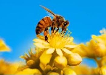 Продаются пчело-семьи вместе с рамками