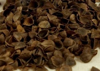 Лузга гречихи от 10 кг до 200 тонн