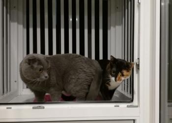 Выгул на окно для животных