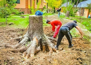 Перекопаем ваш огород под лопату