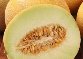 Скороспелые дыни (Сибирь), семена на сайте скороспелка.рф