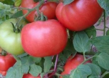 Розовые томаты, семена на сайте скороспелка.рф