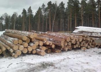 Круглый лес сосна
