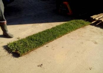 Рулонный газон высшей категории, посадки, ландшафтный дизайн.