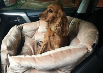 Эксклюзивное автокресло и лежанка для собаки