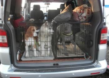 Зоотакси, перевозка собак, кошек.