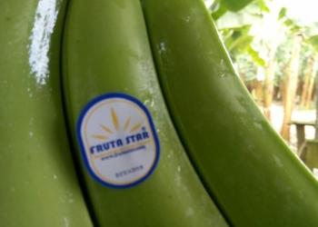 Предлагаем банан из Эквадор.