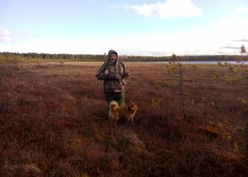 карело-финская лайка, щенки