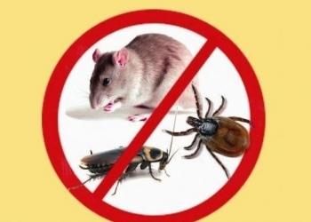 Уничтожение клопов, тараканов, крыс, плесени в Нижнем Новгороде