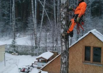 Удалить дерево, спилить деревья, обрезка деревьев