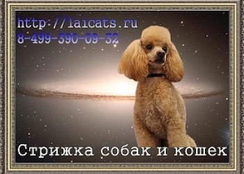 Стрижка собак и кошек на Коломенской