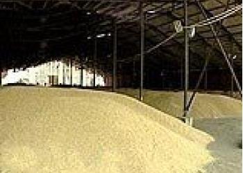 Пшеница 3 кл, ГОСТ Р 52554-2006, оптом, от производителя. Объем от 20 т.