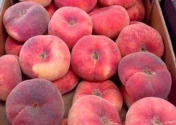 Персик плоский Paraguayo из Испании